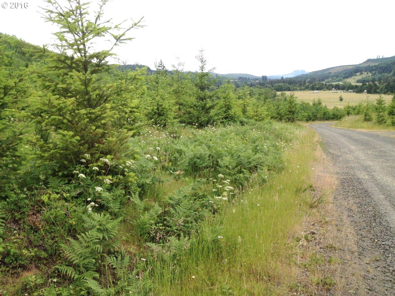 31369 Fireclay RD Lot#2, Cottage Grove, OR 97424