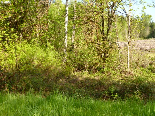 Garoutte RD W, Cottage Grove, OR 97424