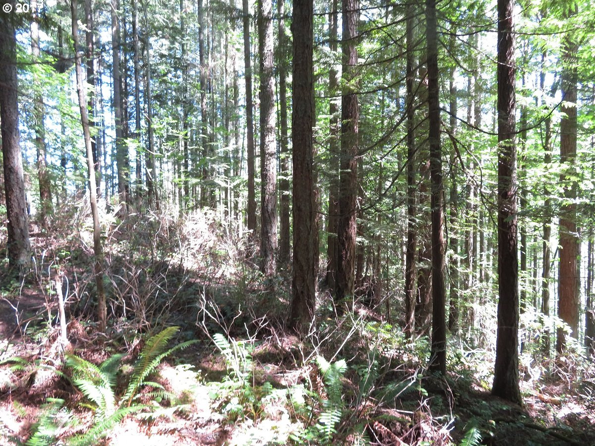 Ohop Valley Ext. RD, Eatonville, WA 98328